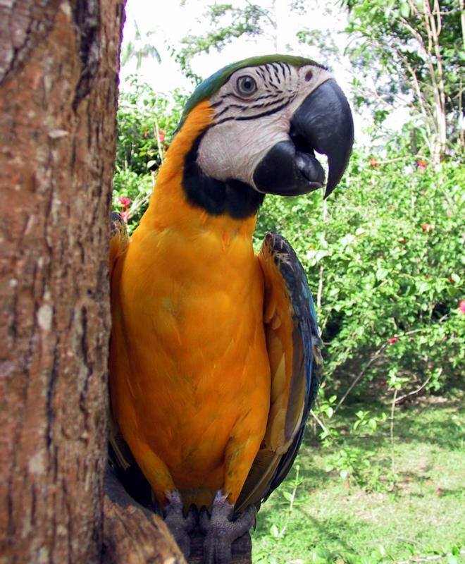 gambar burung macaw besar