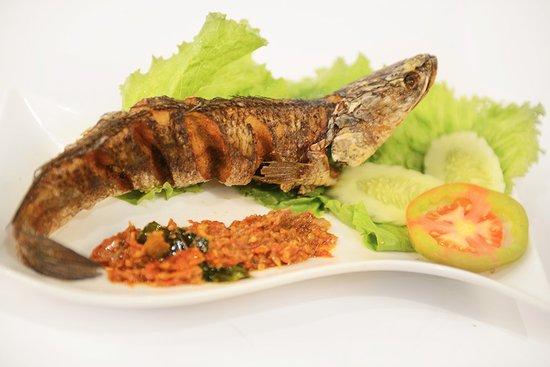 manfaat makan ikan gabus