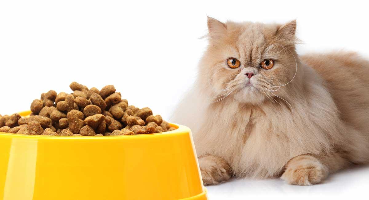 makanan favorit kucing persia