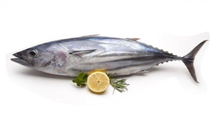 harga jenis ikan tongkol