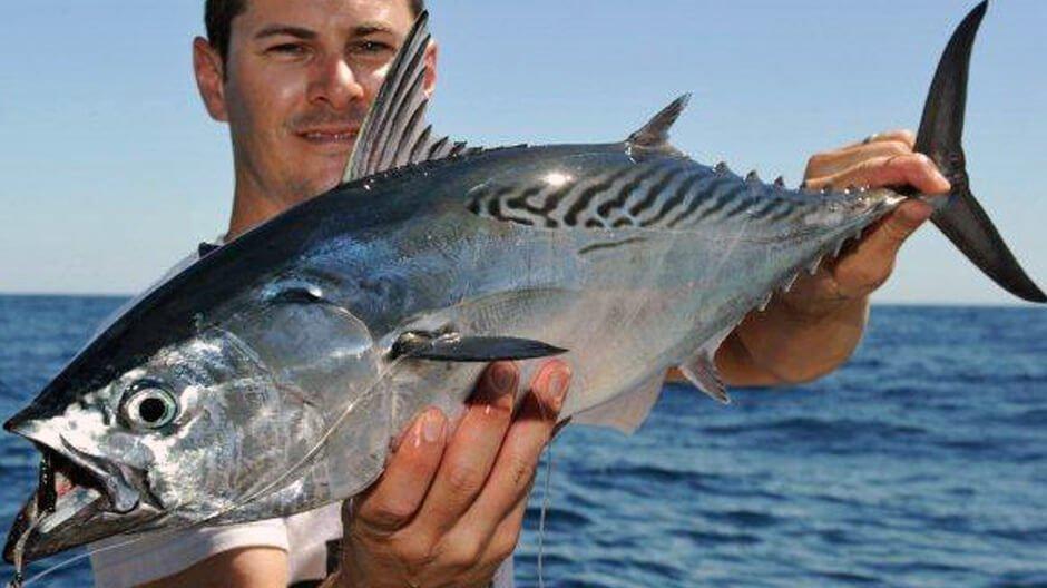 ikan tongkol meningkatkan imun