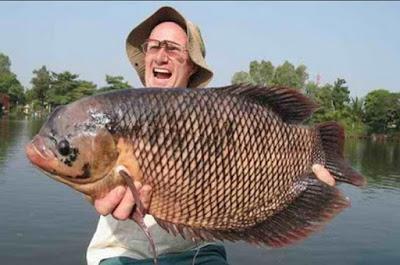 mancing ikan gurame