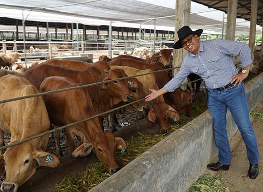 fakta harga sapi limosin