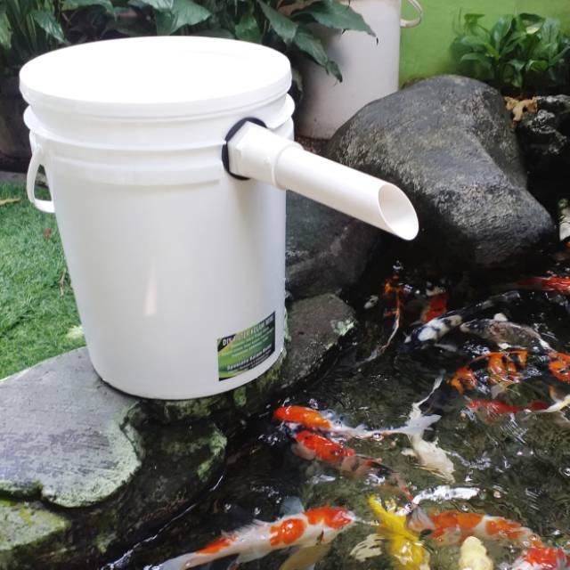 ganti filter ikan oscar