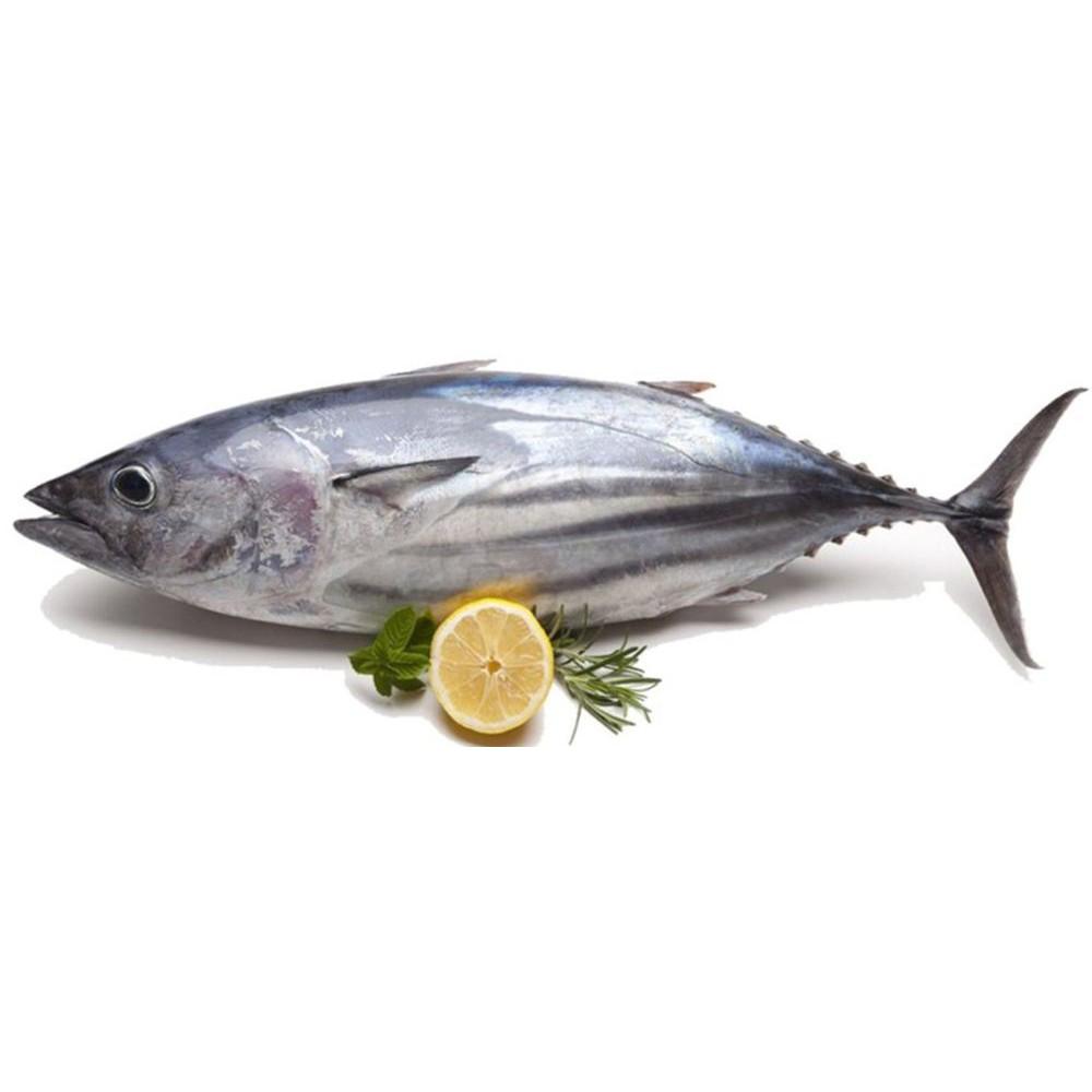 profil ikan cakalang