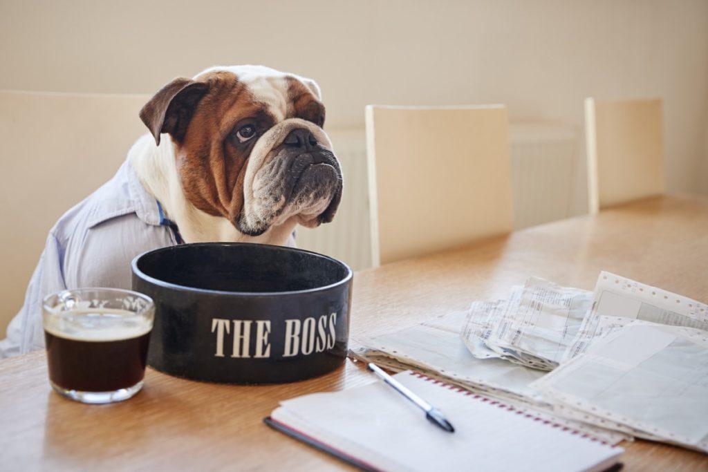 makanan anjing bulldog lengkap