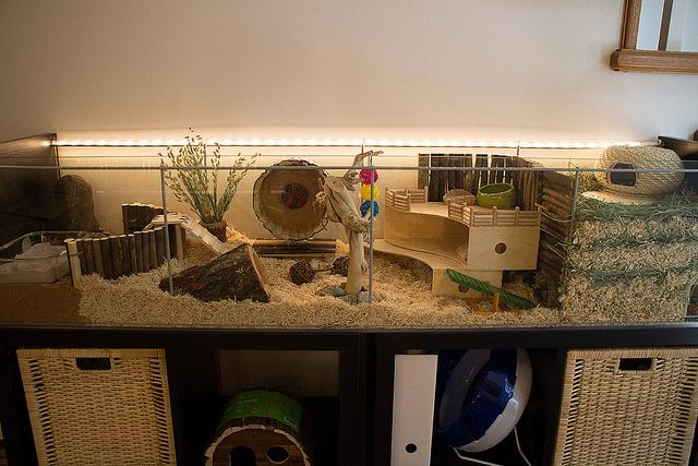 memilih kandang hamster Roborovski